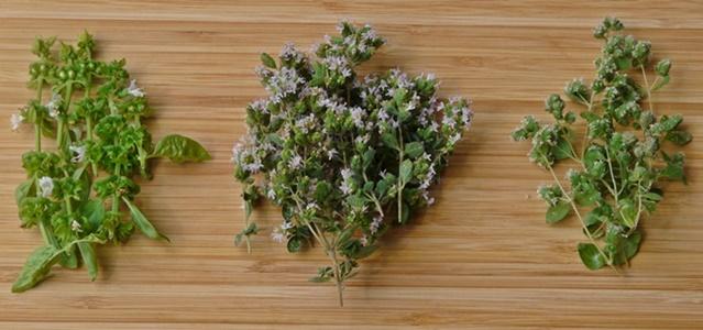Hübsches Geschenk: Selbst angesetzter Kräuterblütenessig mit Weißweinessig, Blüten von Basilikum, Oregano und Majoran